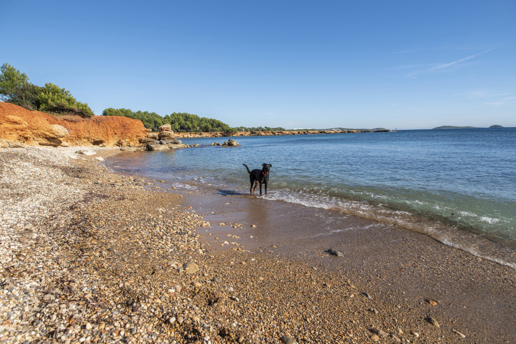 Dog parks and beaches